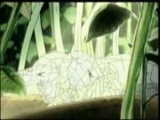 همتارو الحلقة 26