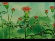 سوسن الزهرة الجميلة الحلقة 2