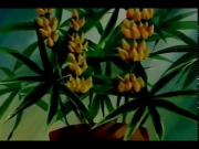 سوسن الزهرة الجميلة الحلقة 9